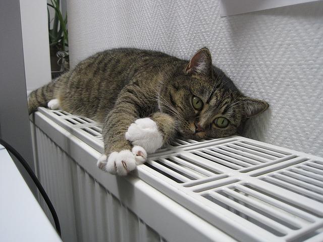 cat-1154649_640